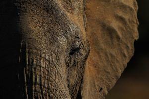 Tragedia ecológica: ¿Qué mató a más de 300 elefantes en Botswana?