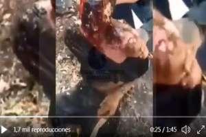VIDEO: Sicarios del CJNG así quemaron rostro de rival; el hombre pedía morir