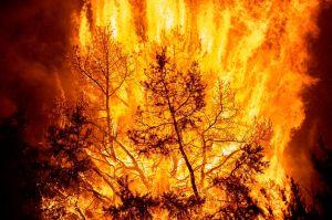 Incendio Bobcat se convierte en el más grande de la historia de LA con casi 100,000 acres quemadas