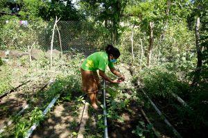 Salvadoreñas dan ejemplo en lucha contra el cambio climático con huertos caseros