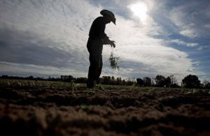 Mexicano emprende caminata a favor de sanidad para campesinos indocumentados