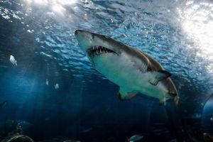 """Cierran playa por presencia de tiburones en Nueva York; salvavidas fue """"mordido"""" por uno"""