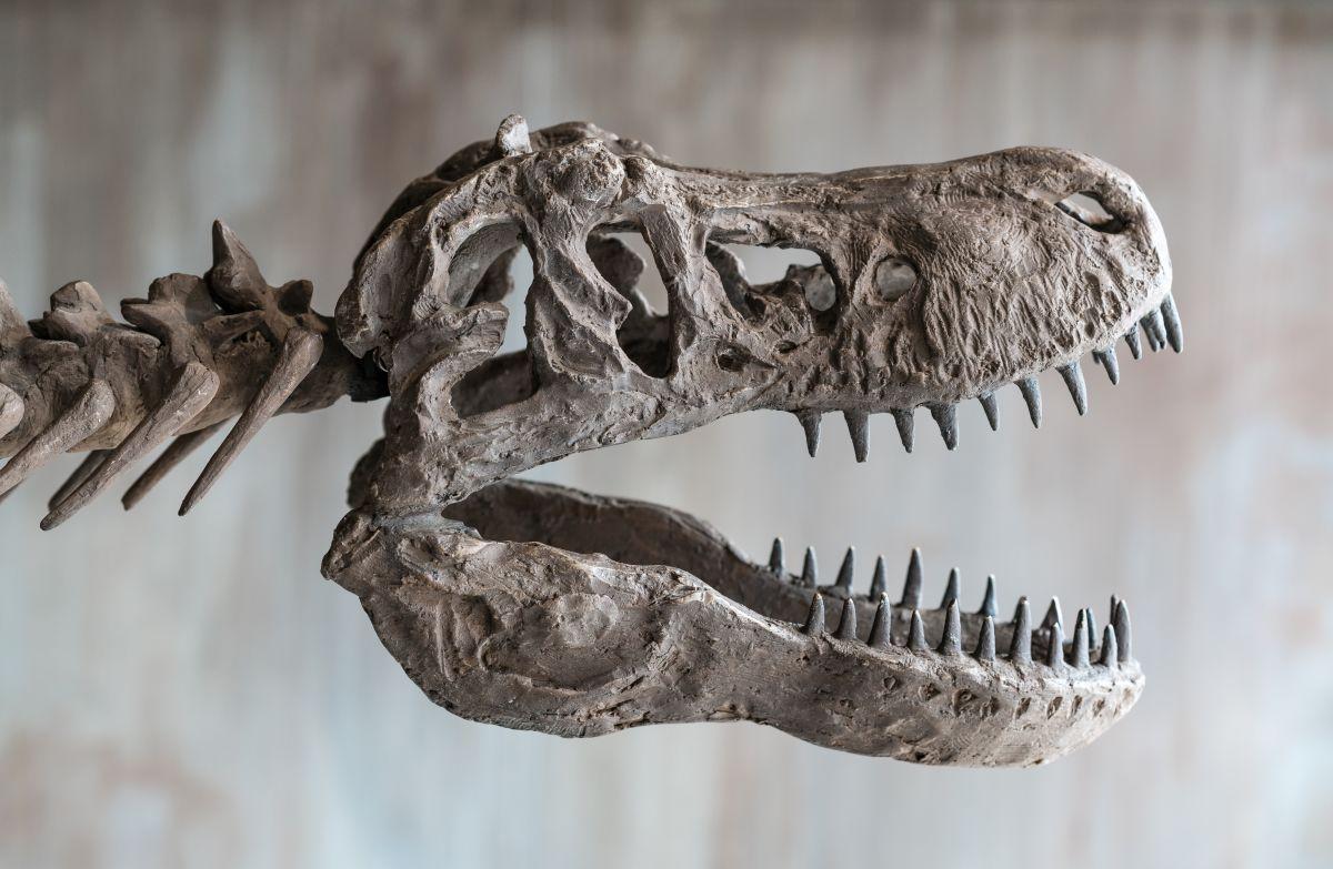 La subasta de un dinosaurio T-Rex en Nueva York que pretende batir récord