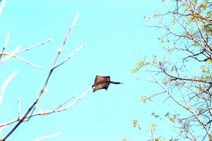 Arrestan a siete personas en Florida por contrabando de ardillas voladoras
