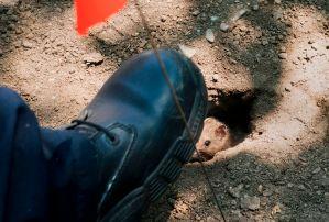 Hombre de El Bronx cae en un nido de ratas por culpa de un hueco en la acera
