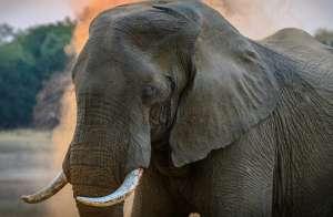 Elefante se reencuentra con su cuidador y la reacción que tiene es asombrosa
