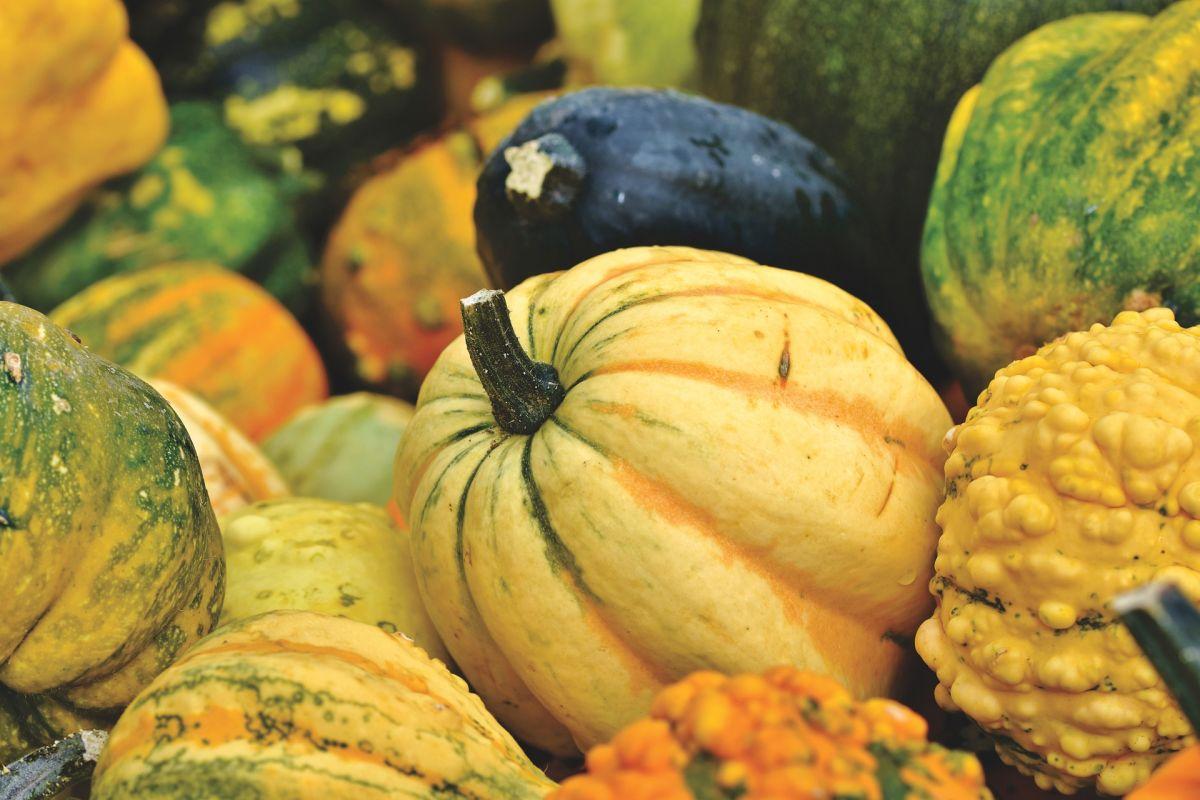 La lista de compras para este otoño, alimentos para estar más fuerte y sano que nunca
