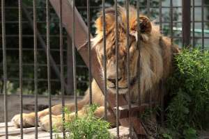 Las impactantes imágenes de decenas de animales en estado de desnutrición en zoo de África
