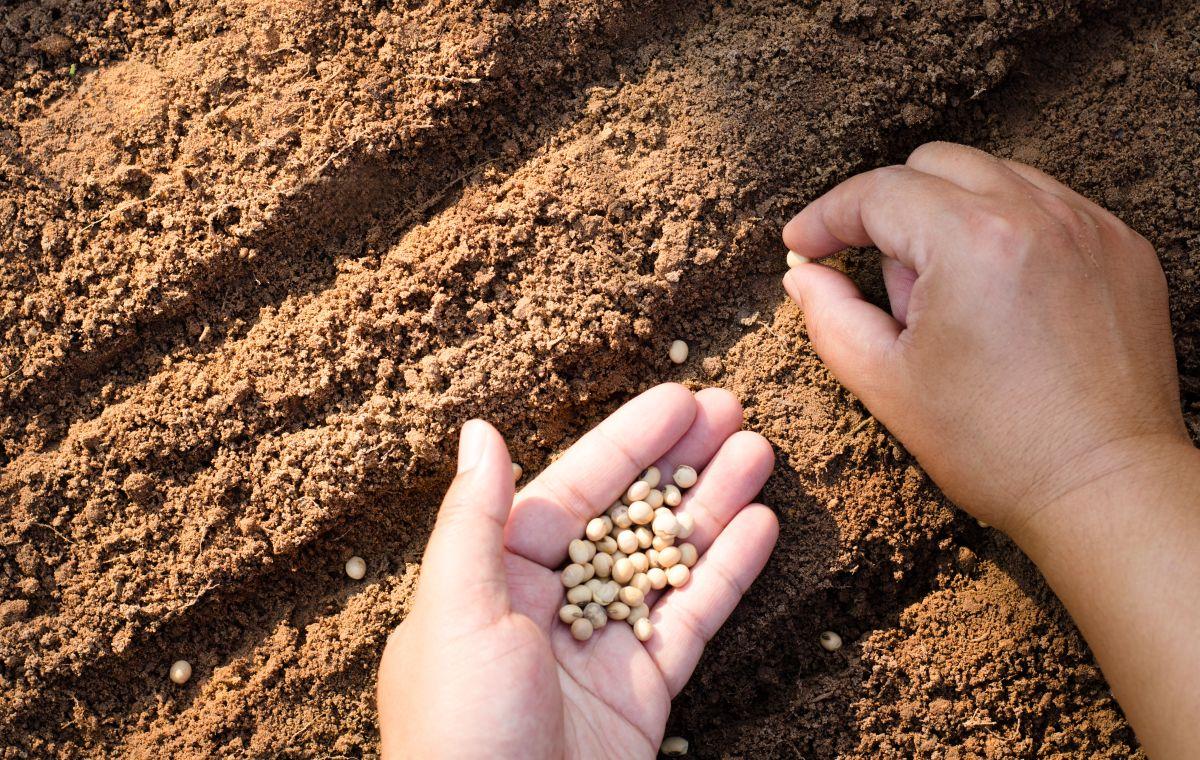 Cuánto saldrían los alimentos si se considerara el impacto ambiental de su producción