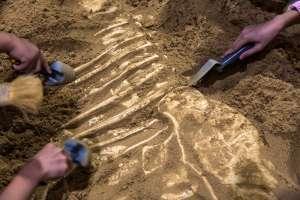 Sale de excursión con su padre y encuentra restos de dinosaurio