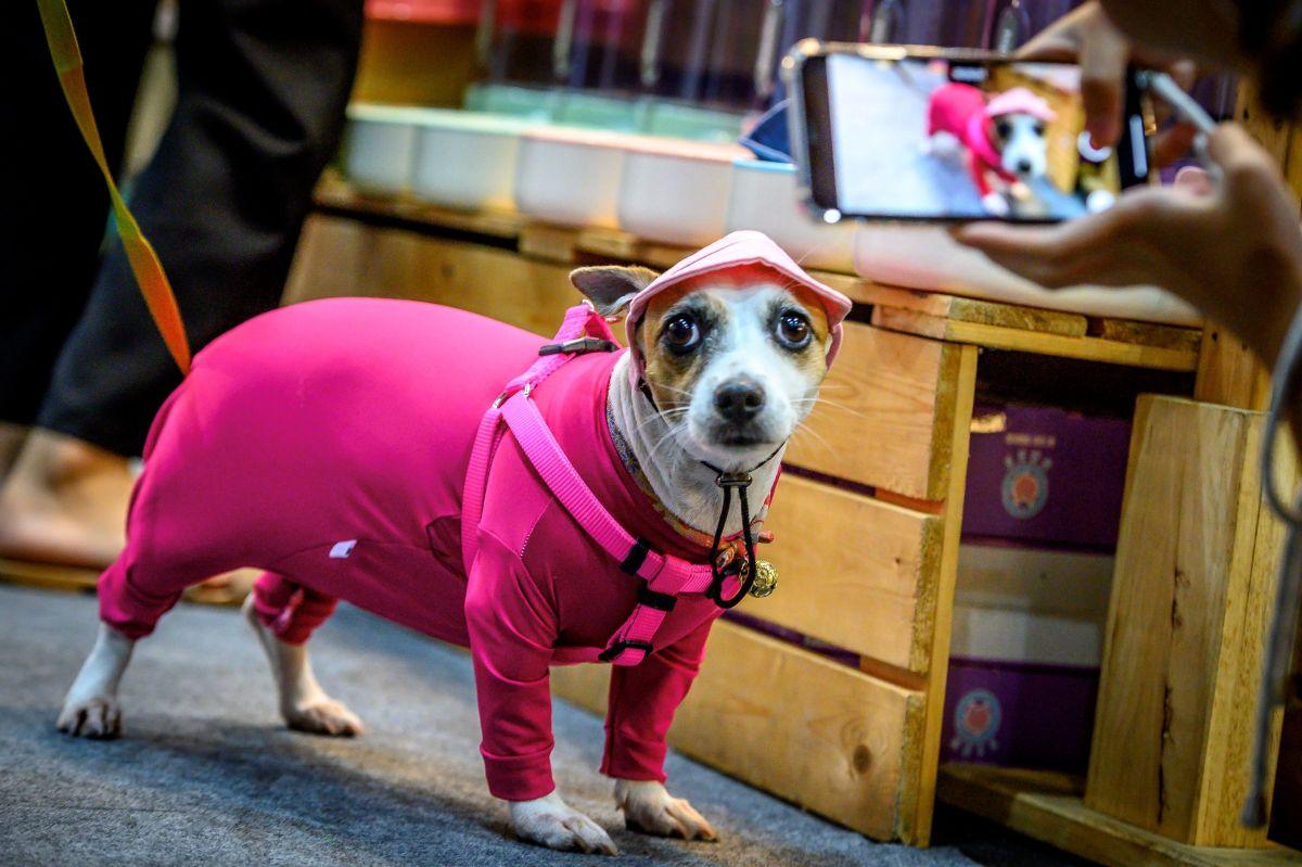 Qué tienda departamental ofrece pijamas para toda la familia y para tu perro desde $5 dólares