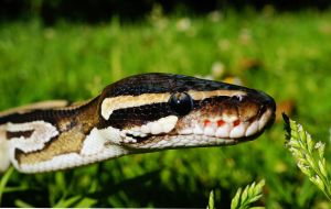 Bebé de un año es atacada por serpiente que se escondió en los juguetes del jardín