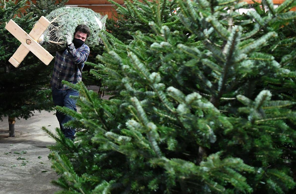 ¿Por qué el precio del arbolito de Navidad es más caro este año?