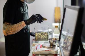 Competencia por negocios del cannabis