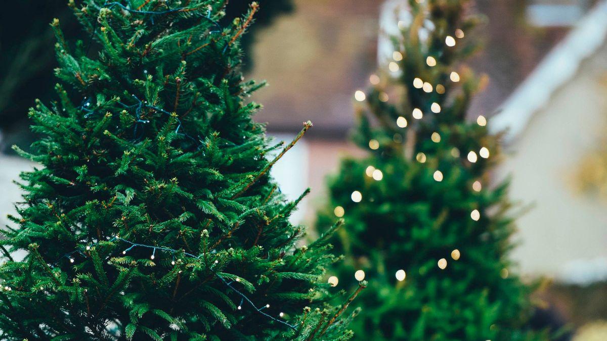 Cuál es el mejor momento para comprar tu árbol de Navidad
