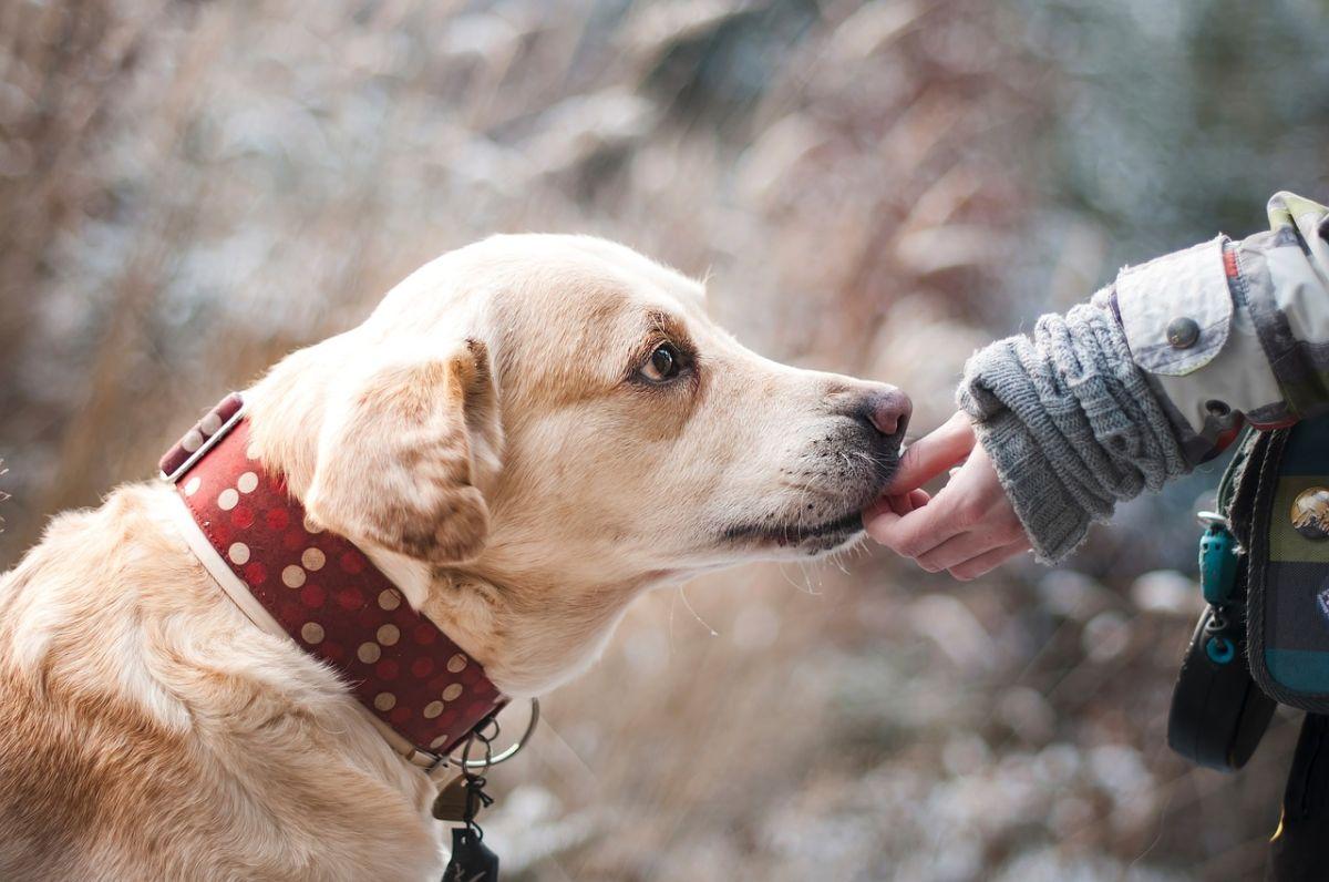 7 snacks saludables para premiar a tu perro