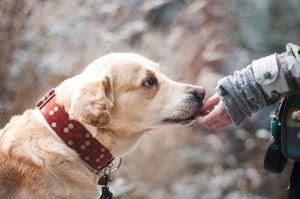 Por qué es bueno comer avena también para tu perro y cómo dársela de manera segura