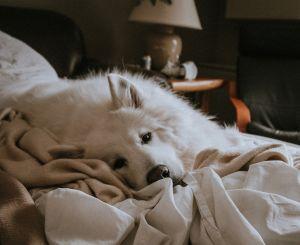 Por qué es bueno dejar que tu perro duerma contigo, según la ciencia
