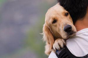 Se hace viral perro que imita la cojera de su dueño