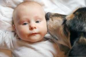 Bebé de 4 meses murió aplastada por su perro