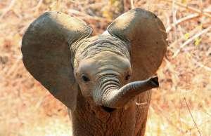 Así de asombroso es el ultrasonido de un bebé elefante