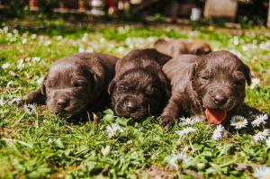 Conmociona el nacimiento de un perro con un solo ojo, 2 lenguas y sin nariz