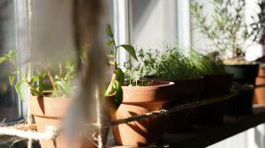 5 modos de comenzar con un huerto en tu casa (aunque no tengas jardín)
