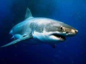 """Sorprende cría de tiburón con rostro """"humano"""""""