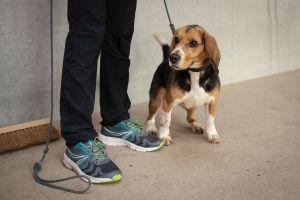 Seresto, uno de los collares antipulgas más populares, está relacionado con la muerte de más de 1,700 mascotas