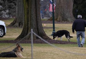 Perros de Joe Biden regresan a la Casa Blanca después que uno mordiera a un agente del servicio secreto