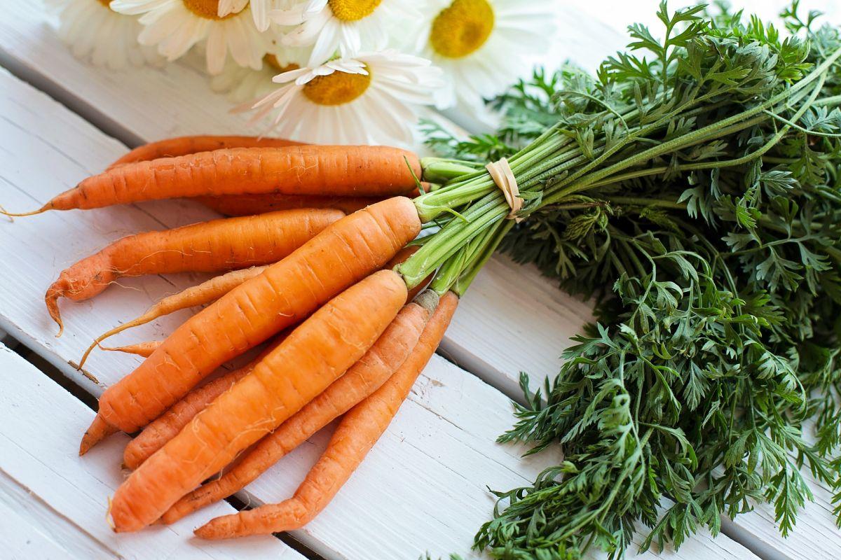 Manojo de zanahorias para bajar de peso