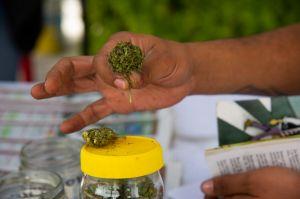 Avanza ley para el uso recreativo de marihuana en México