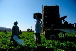 Avanza en el Congreso proyecto de ley que daría la ciudadanía a un millón de trabajadores agrícolas