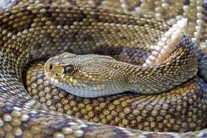 PETA denuncia crueldad animal ejercida en granjas de serpientes para obtener su piel