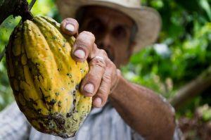 Cómo incluir cacao en tu dieta y aprovechar sus propiedades sin engordar