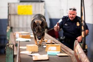 """Can de la Patrulla Fronteriza en Arizona descubre 5 libras de fentanilo en """"burritos"""" con valor de $60,000"""