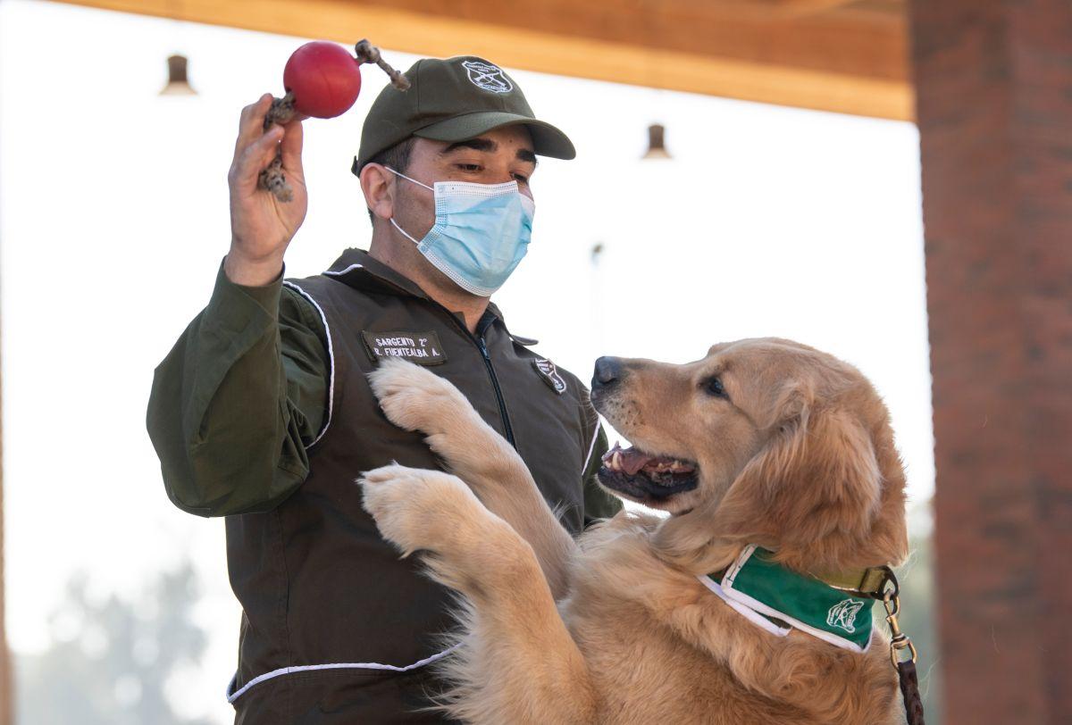 Dos veterinarios en Chile vacunaron a personas supuestamente contra coronavirus con dosis para perros
