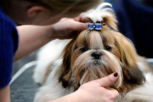 Una mujer de Milwaukee perdió a su perro y se sorprende al encontrarlo a la venta en Facebook