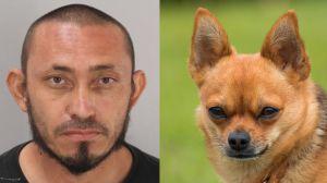 Un hispano desalmado acuchilló hasta la muerte a un pequeño chihuahua