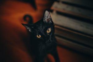 Causa conmoción video de gato negro aparentemente provocando un incendio