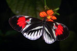 La curiosa mariposa que tiene un número 88 en sus alas