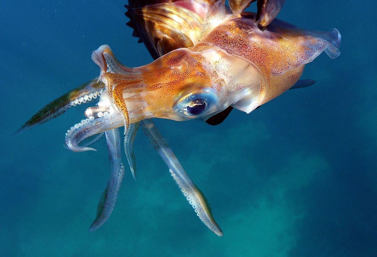 Una ciudad de Japón decidió gastar parte del dinero de estímulo por COVID-19 en una estatua gigante de calamar