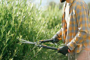 Sentencian a Bayer pagar $25 millones a hombre de 71 años que contrajo cáncer por usar su producto de jardinería Roundup