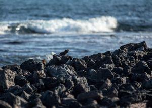 Se derrumba el Arco de Darwin, uno de los principales atractivos naturales de las islas Galápagos