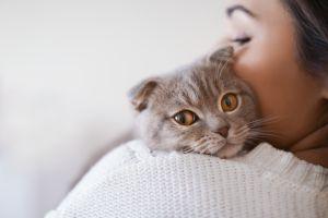 Estudio comprueba que una persona puede llegar a querer más a su mascota que a su pareja