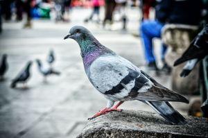 Muere quinceañera por bacteria de heces de paloma