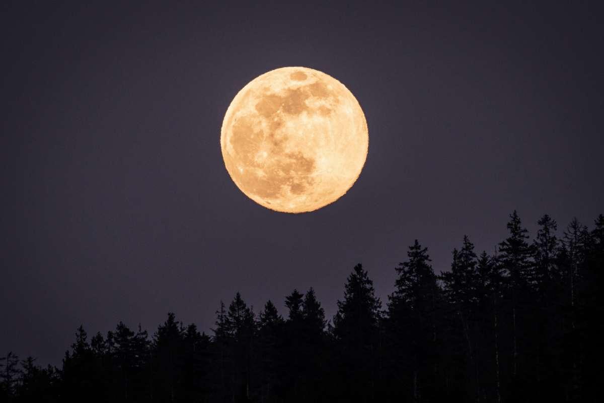 Superluna de sangre y eclipse lunar, el gran espectáculo celestial que  podrá ser visto en Estados Unidos - El Diario NY