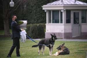 """Duelo en la Casa Blanca por muerte de """"Champ"""", uno de los pastores alemanes de los Biden"""