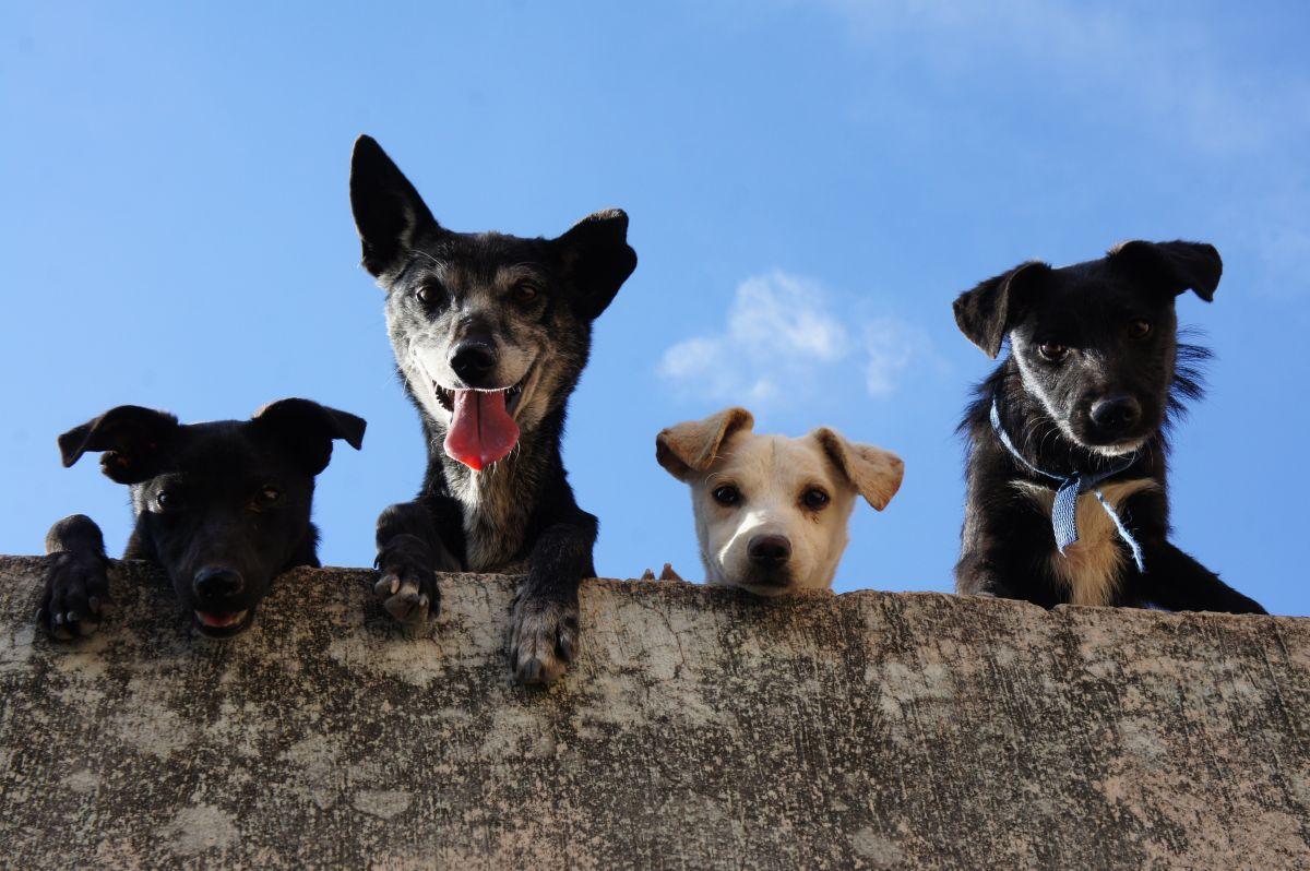 Especialistas recomiendan incluir en nuestro presupuesto de emergica, recursos para la atención de nuestras mascotas.