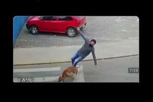 """VIDEO: Perro """"atropella"""" a un hombre que intentó cruzar la calle"""